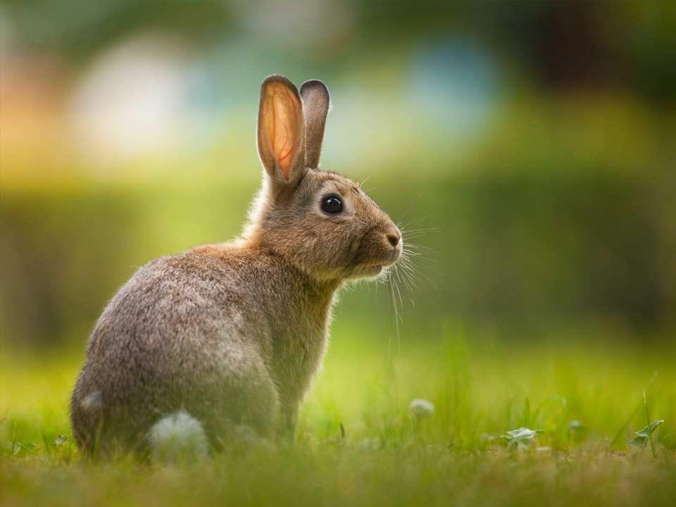 Hortus-Harderwijk_natuur-milieu-educatie_CT-konijn