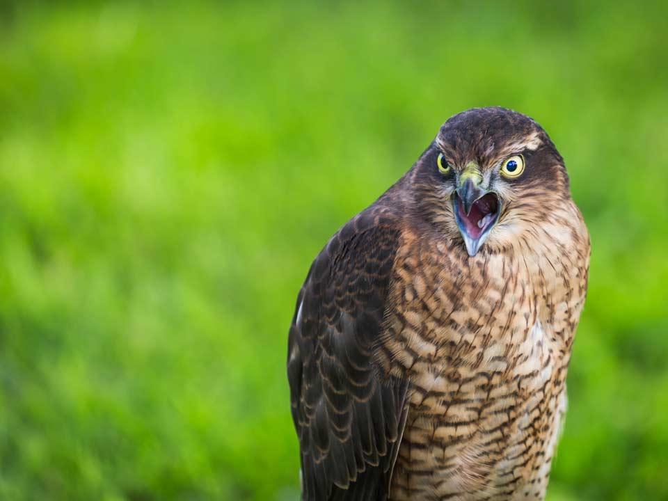 Hortus-Harderwijk_natuur-milieu-educatie_CT-roofvogel-01