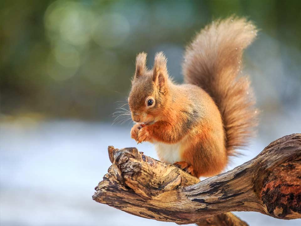 Hortus-Harderwijk_natuur-milieu-educatie_CT-eekhoorn