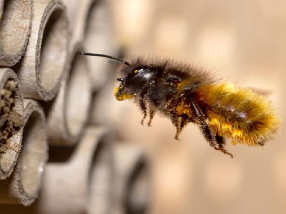 bijenhotel voor laatste nieuws